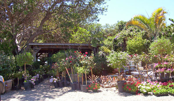 Pacific View Nursery Floridascape Landscaping Fruit Tree Los Angeles